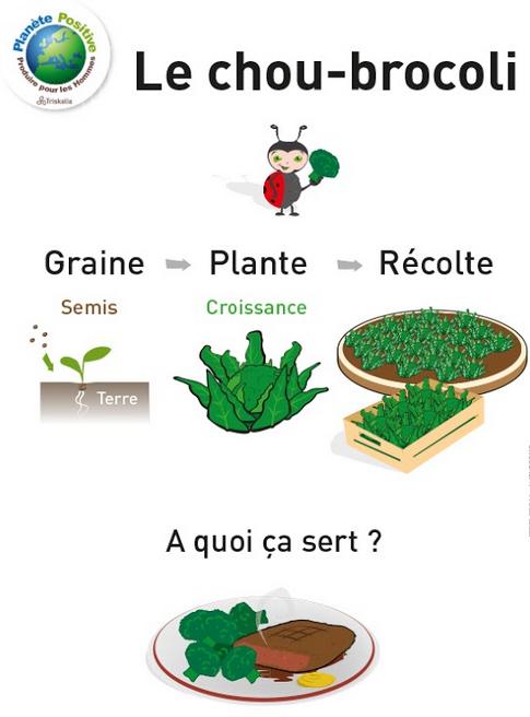 dessin brocolis