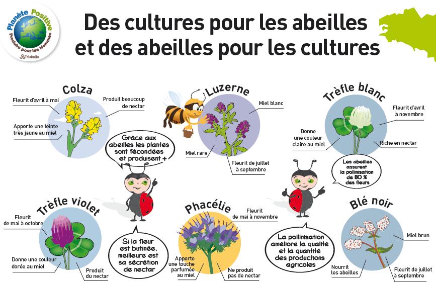 plantes et fleurs pour abeille